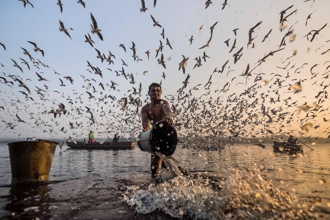 The Winter Migration of Siberian Seagulls in Delhi Photographed by Navin Vatsa (8 pics)