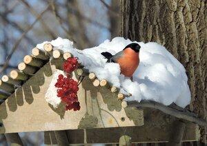 Привет от наших снегирей!