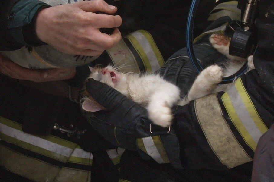 В Волгограде умерший при пожаре кот воскрес на руках у пожарного