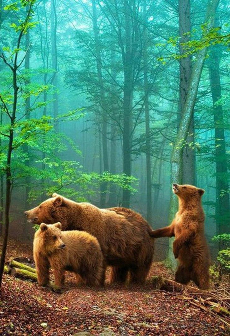 Бер - Хозяин лесов