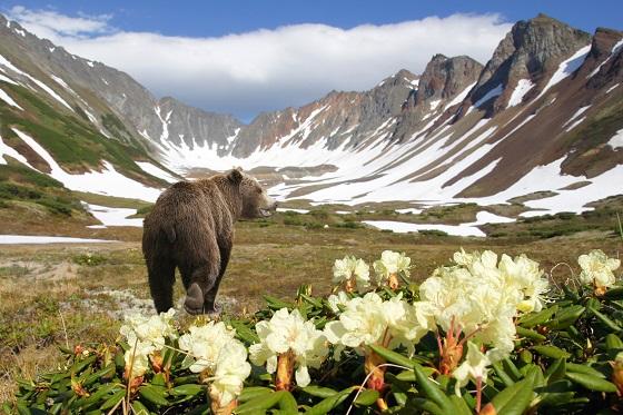 Открытки Всемирный день дикой природы. Горы, медведь, цветение