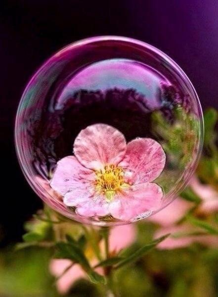 Открытки Всемирный день дикой природы. Цветок