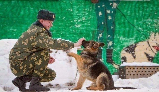 Как щенки становятся защитниками границы — в фотографиях журналиста Василия Федосенко