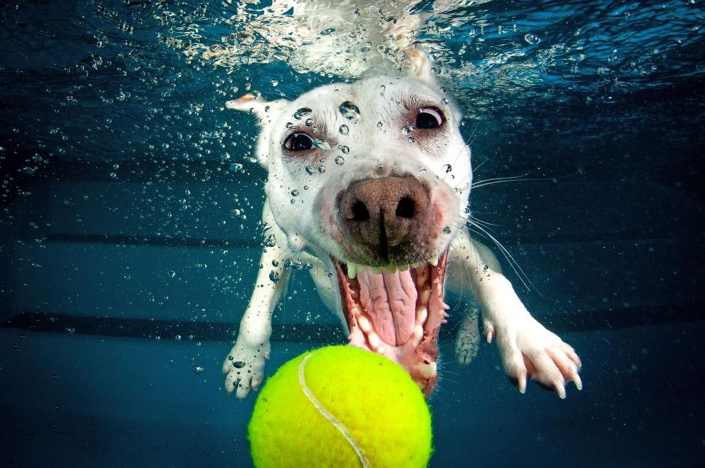позитив собаки помощь охотник подводный подводная Фотография
