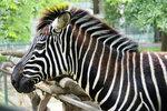 Грустно в зоопарке