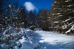 Еще деревья спят под снежной тяжестью...