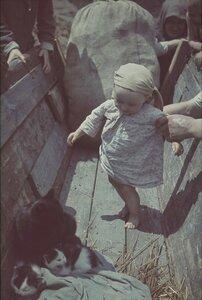 Малыш и кошка с котенком на телеге