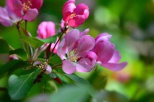 Любви небесной яблоневый цвет...
