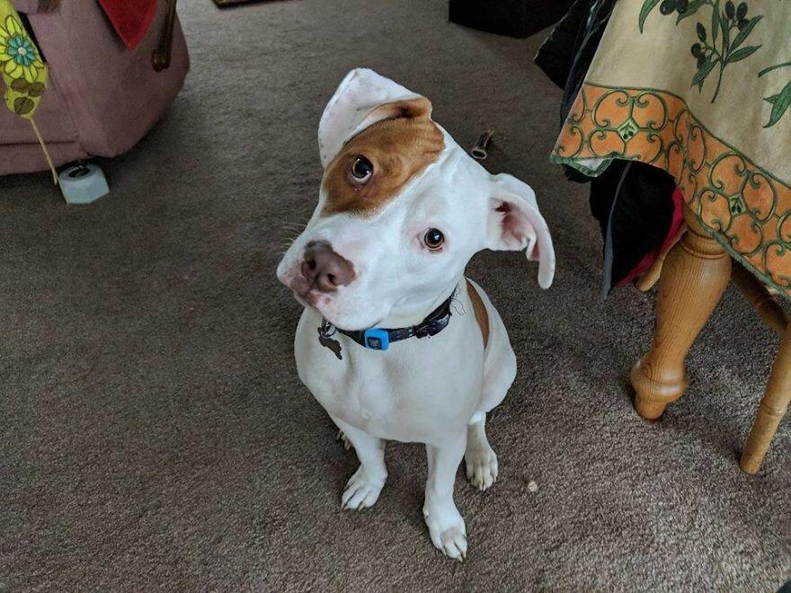 Глухой пёс, от которого пять раз отказывались, обрёл дом и учит язык жестов