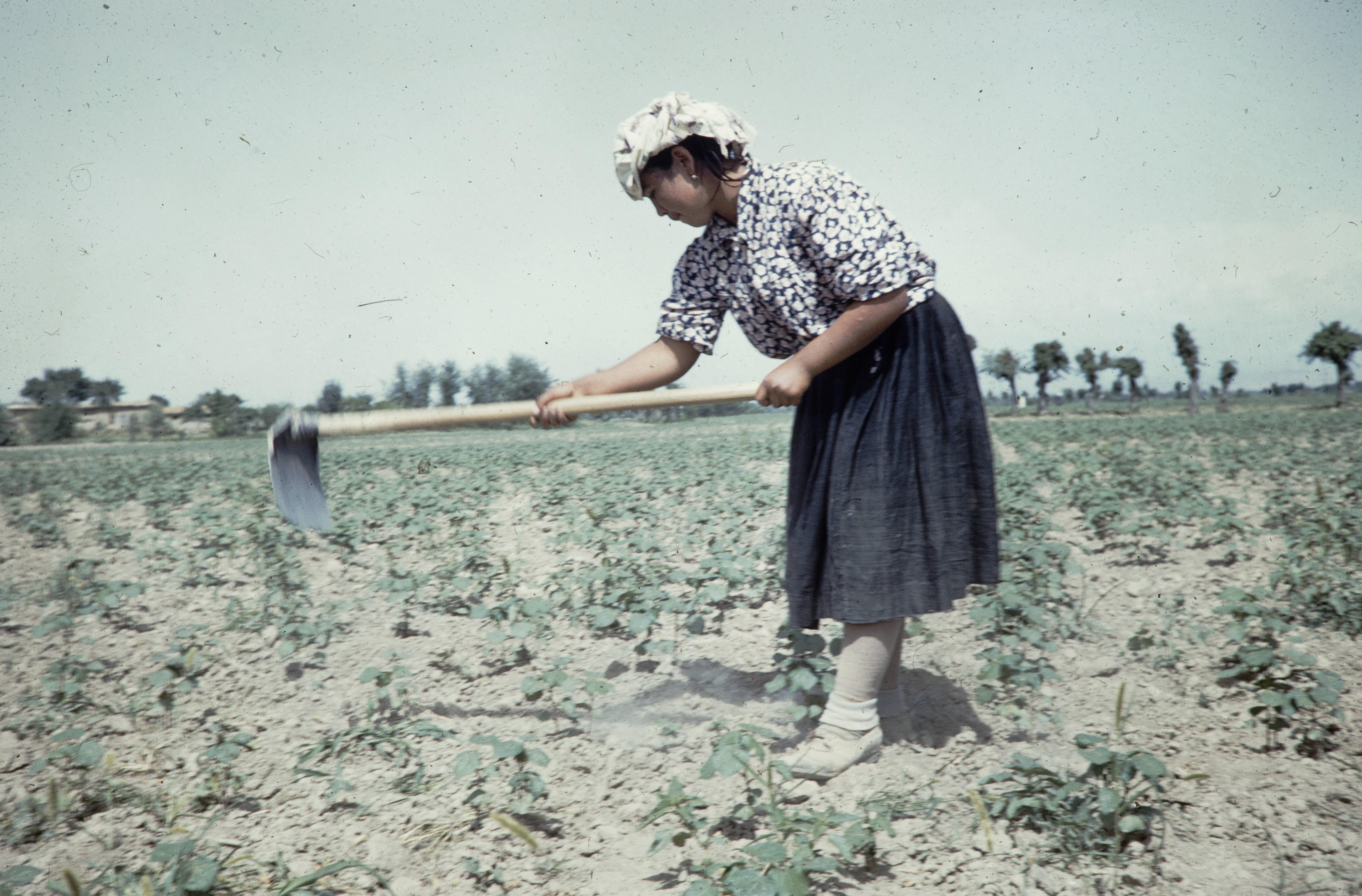 Женщина, обрабатывающая почву