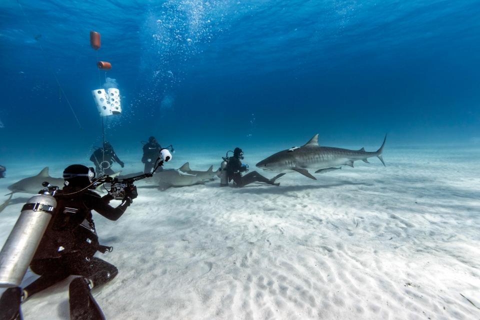 Невероятные снимки дайверов с четырехметровыми акулами