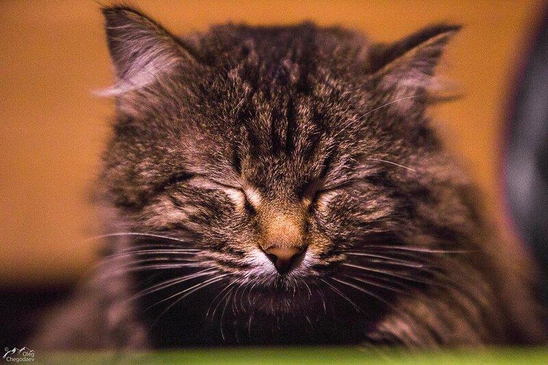 Как по башкирски кот