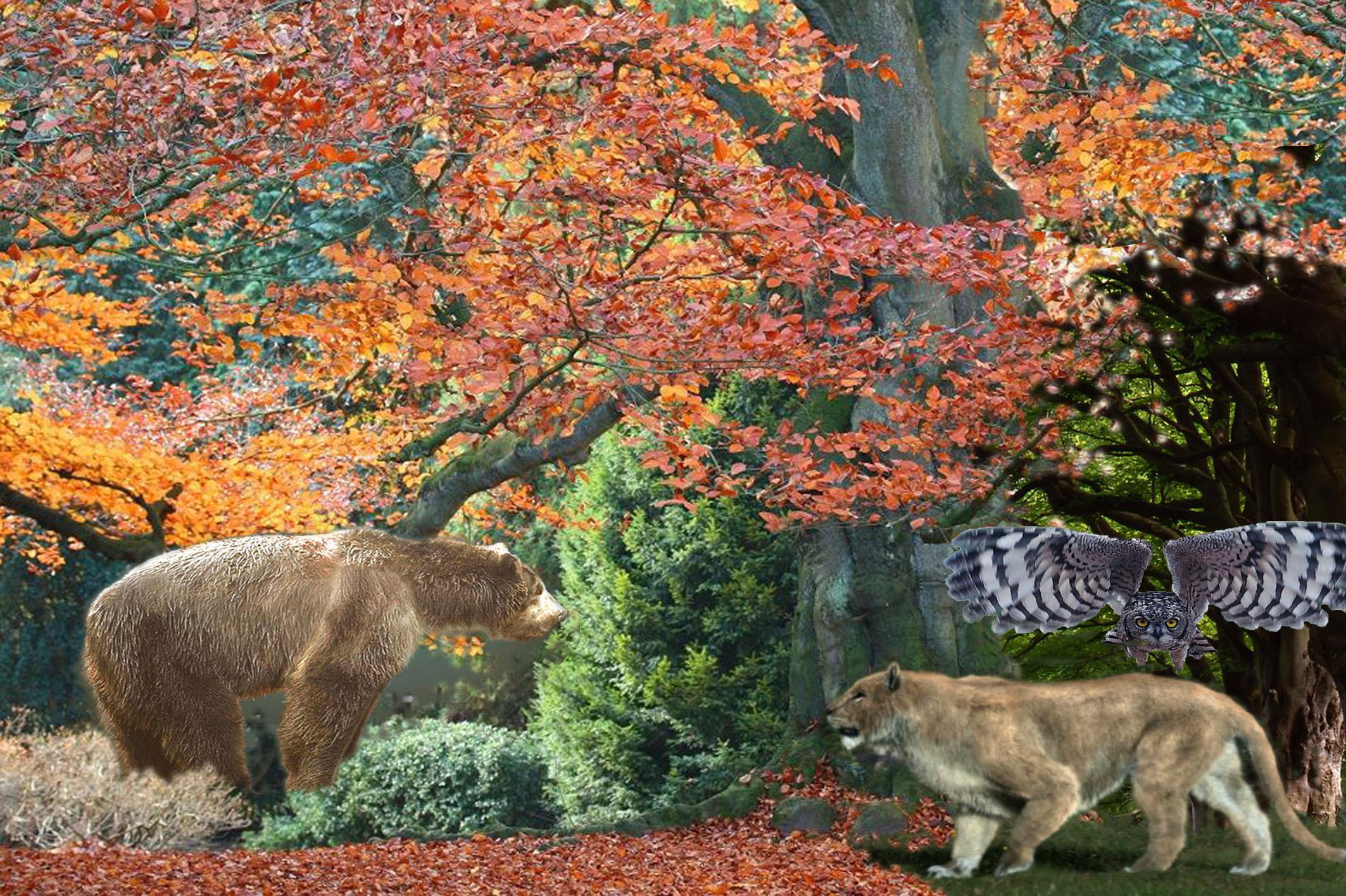 буковый лес.jpg