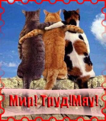 Открытка! 1 Мая! Три кота