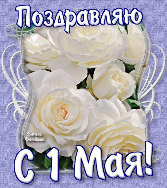 Открытка. Поздравляю с 1 мая! Белые розы