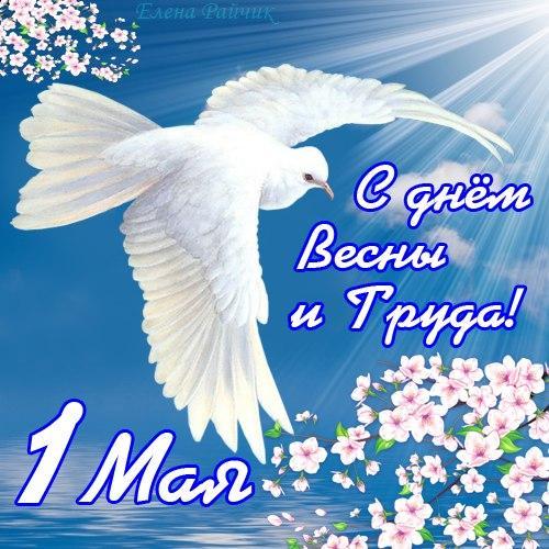 Вам открытка: Открытка. С днем весны и труда! 1 мая! Белый голубь над цветущей веткой Открытки поздравления фото