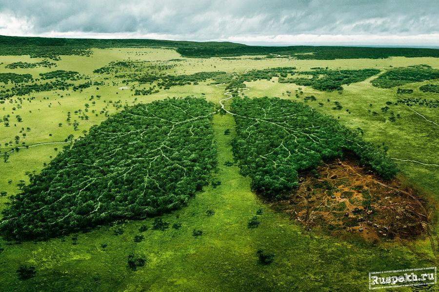 Всероссийский день посадки леса. Легкие нашей планеты