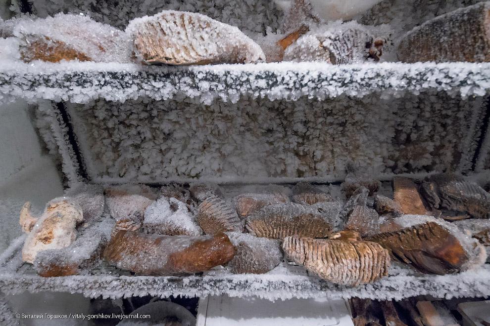 19. К сожалению, на момент нашего посещения музей мамонта находился в достаточно заброшенном со