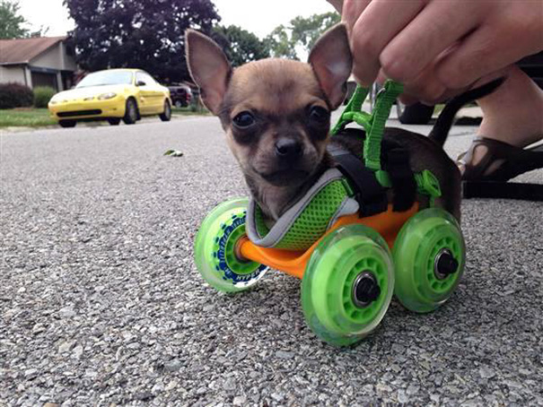 3. 80-летний мужчина изобрел отличный способ обезопасить собак от хождения по дорогам, где ездят маш