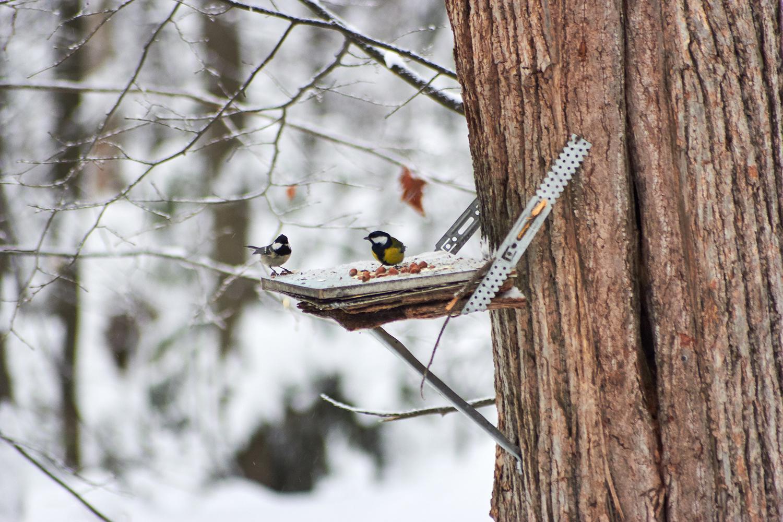 один смотреть фото фотоконкурса птицы на кормушке пищу употребляет падаль