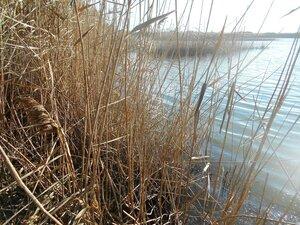 Берег озера ... DSCN0447.JPG