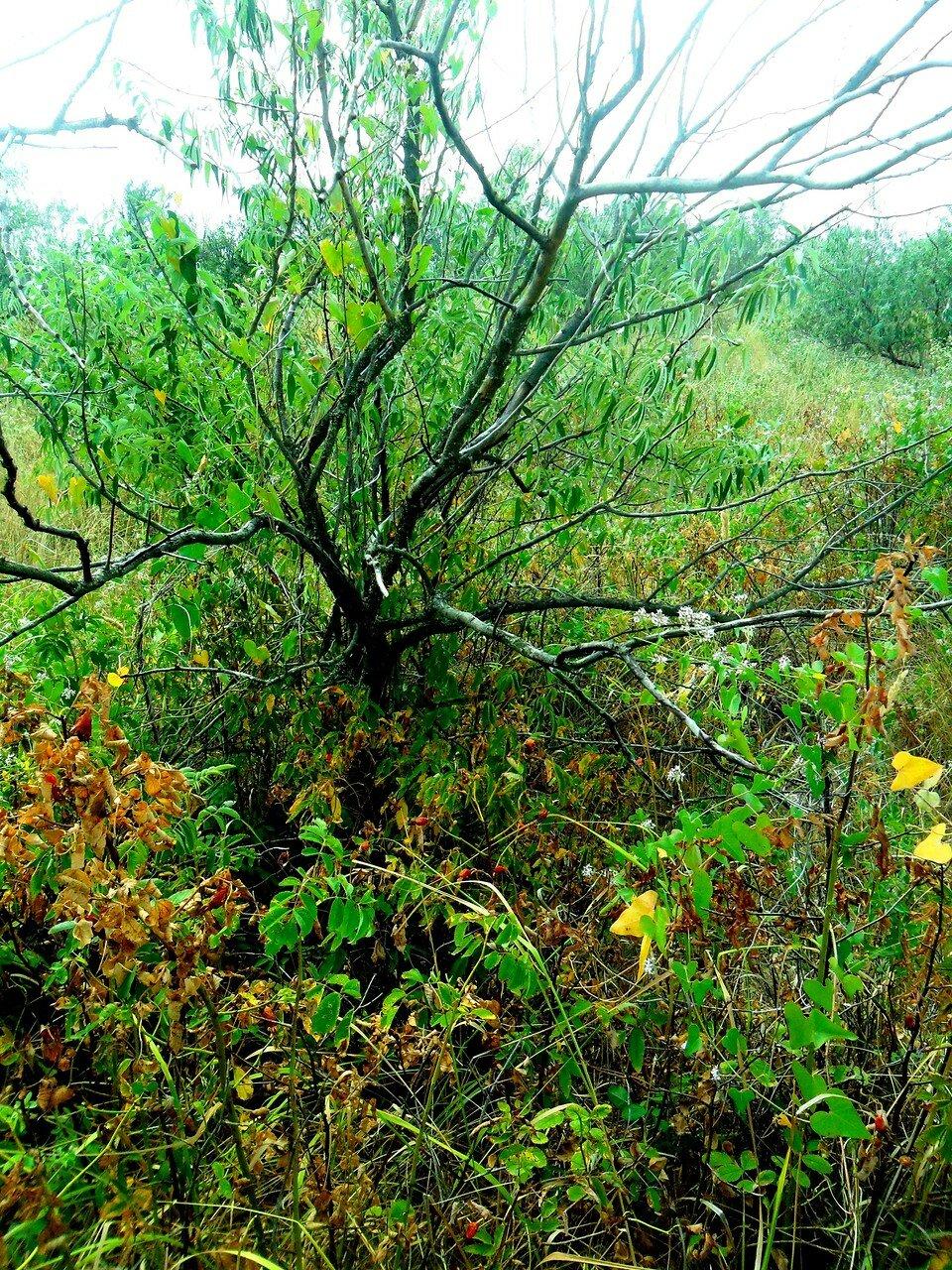 Краски лесного августа ... SAM_3363.JPG