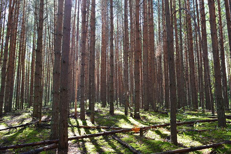 леса 9.jpg
