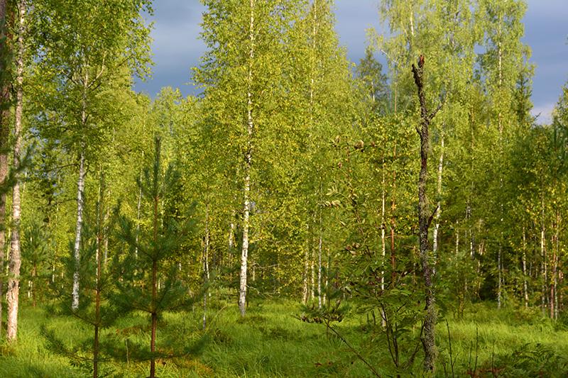 леса 14.jpg