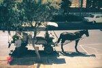 Бат-Ям. Уличный торговец зеленщик