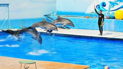 Летом в Молдове появится первый дельфинарий