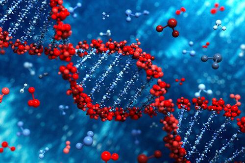 Для экспериментов ученые хотят создать человеческий геном