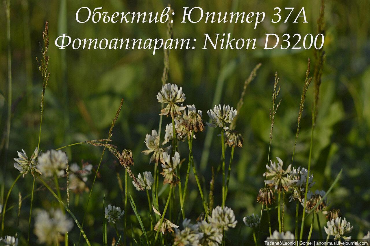 Объектив Юпитер 37А и Nikon D3200