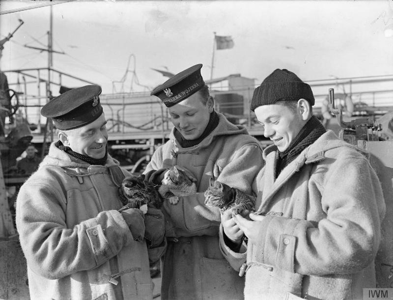 Pet cats Żaba (Frog) and Tygrys (Tiger) being encouraged to make friends with a stowaway, which must have escaped from an oiler, on board the Polish Navy destroyer ORP Piorun (Thunderbolt). The Poles make a great fuss of their pets for they hold it as an ill omen if cats voluntarily leave the ship before she sails. Western Approaches, late 1940.