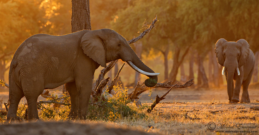 Животные Южной Африки - Фотограф Morkel Erasmus