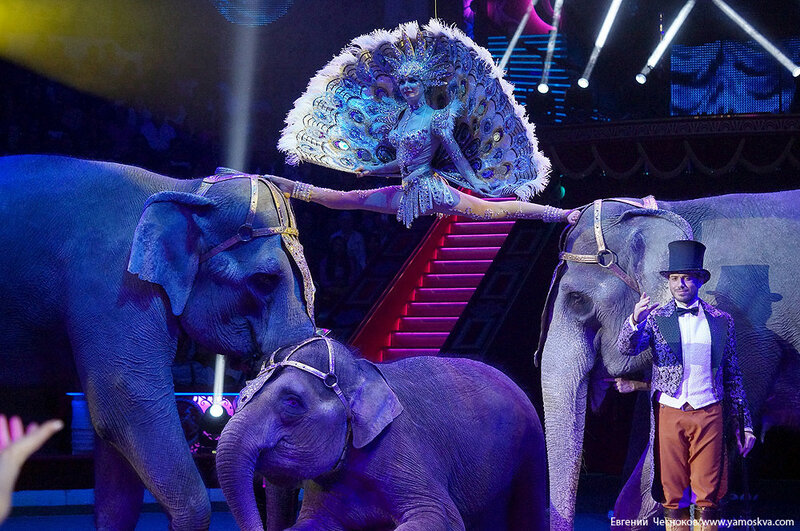 Осень. Цирк. Корниловы. слоны. 02.09.16.03..jpg