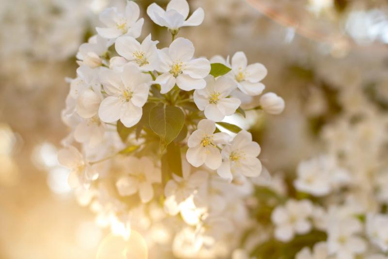 Солнце на цветах