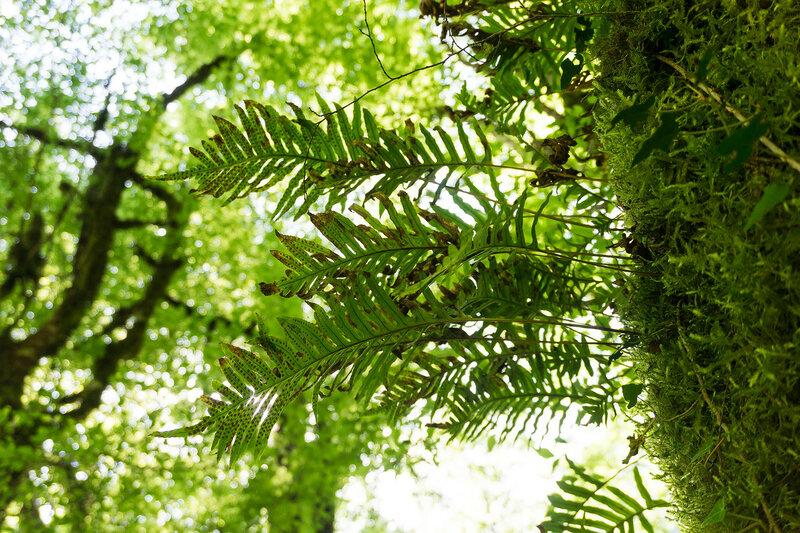 папоротники растут на стволе дерева