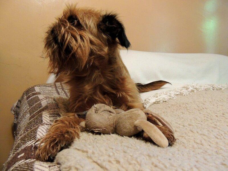 Мираж и игрушечка