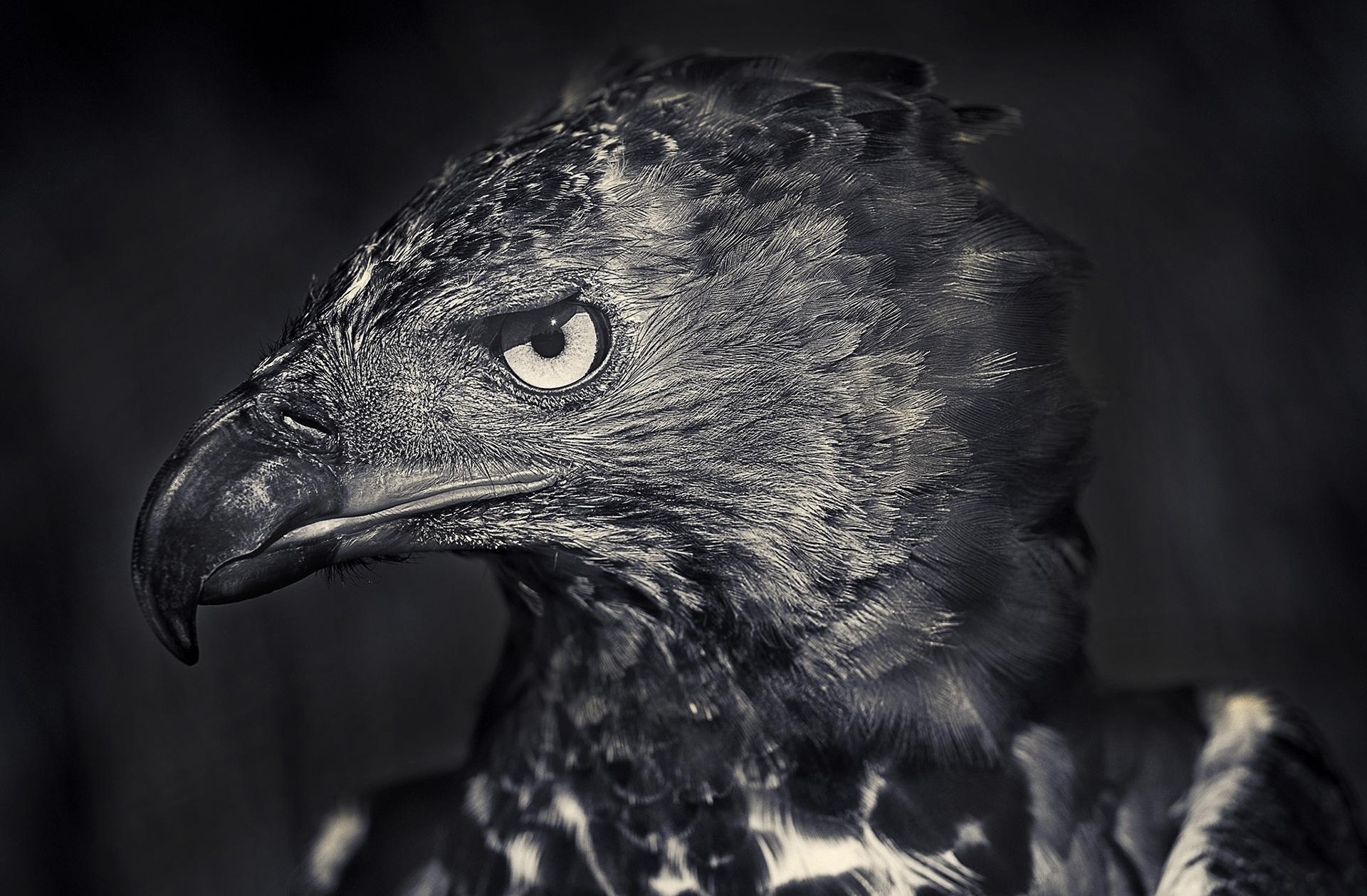 Птицы Antti Viitala