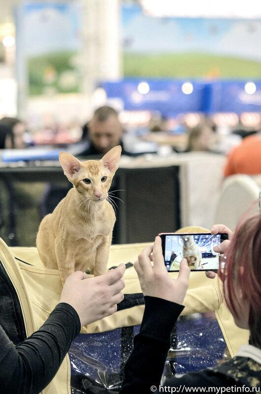 День кошек в России  1 марта Кошкин День отмечают в