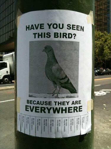 Вы видели эту птицу.jpg