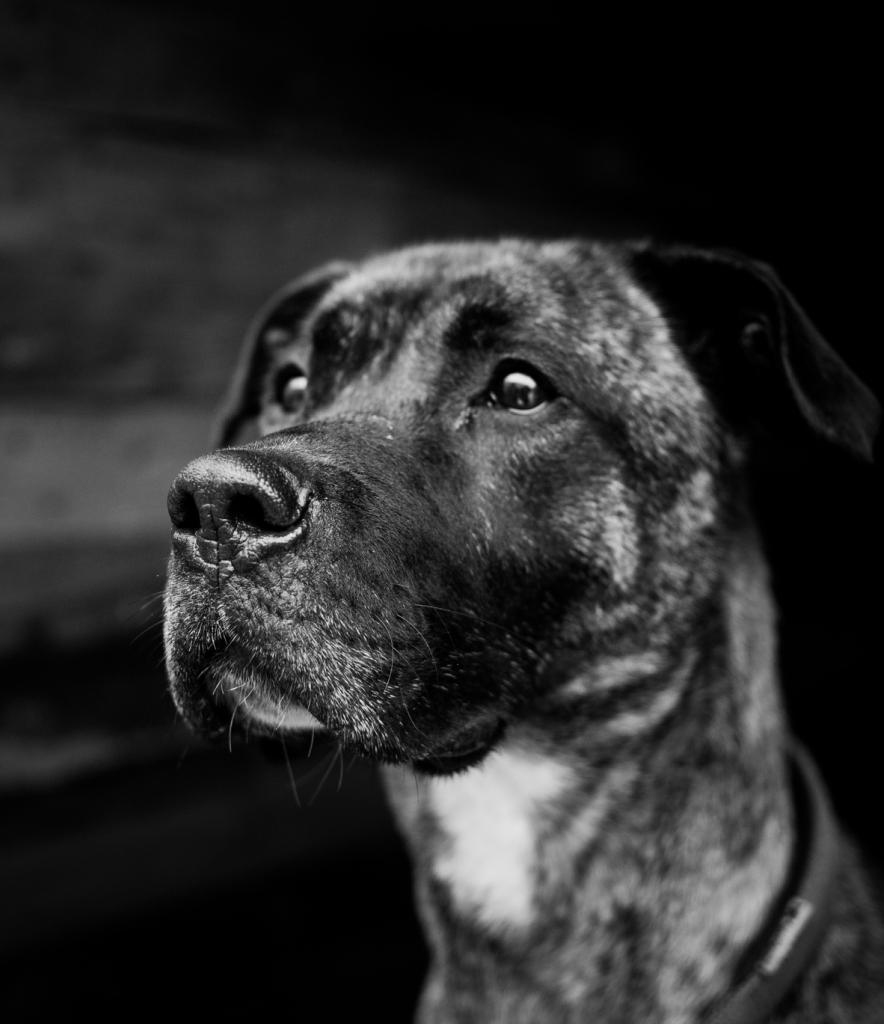 Тай собака из приюта догпорта