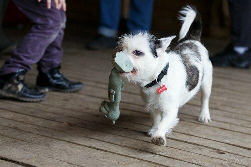 Филя собака из приюта догпорта