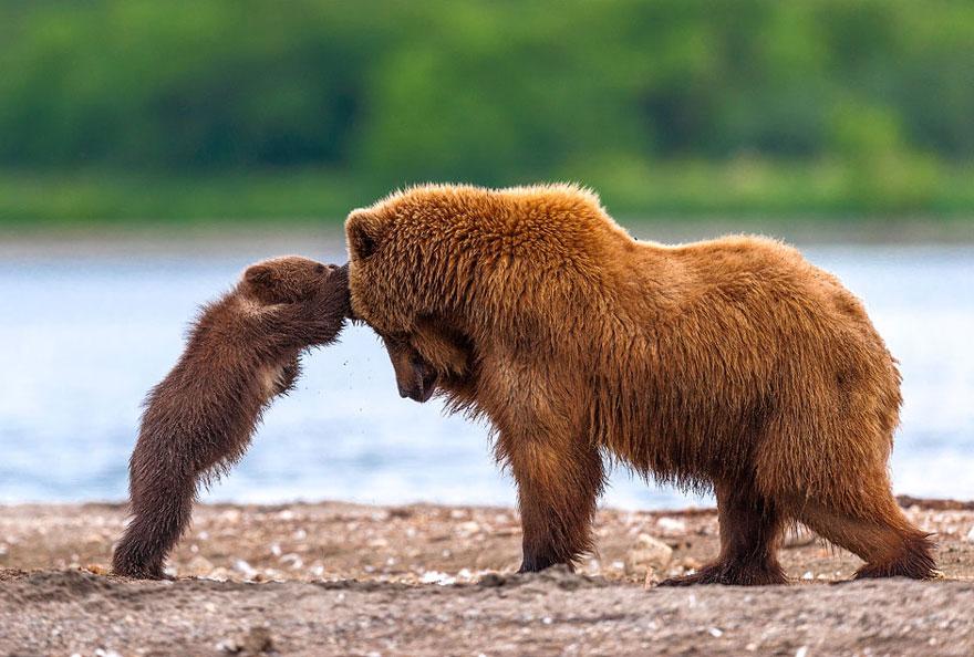 «Нет, мама, не надо, не хочу я больше этот рыбий жир пить!»