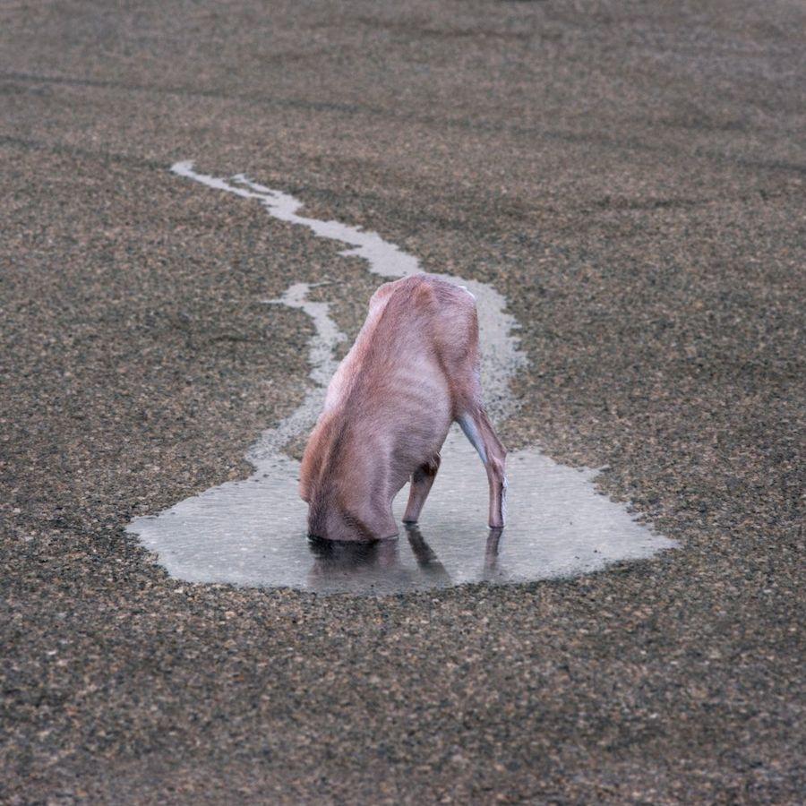 Серия фотоманипуляций, критикующих отношение человека к животным