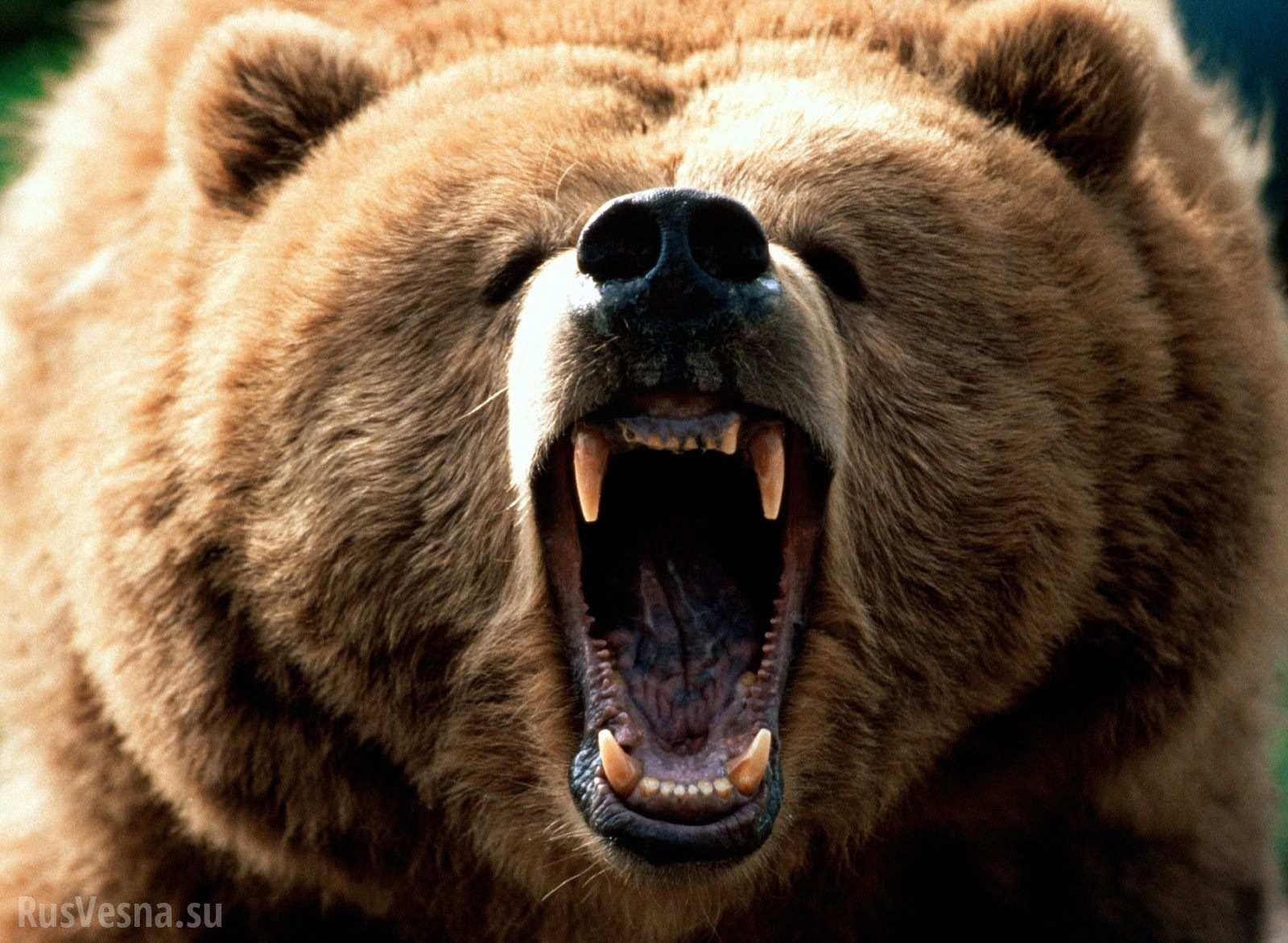 ВБелой Церкви цирковой медведь напал на наблюдателей