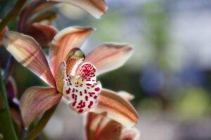 cvetok-orhideya-makro.jpg