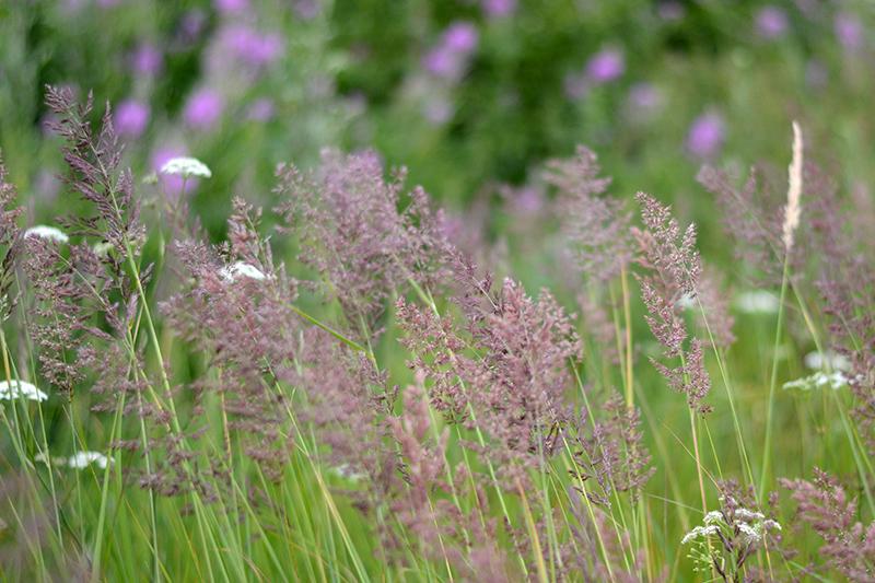 трава трава.jpg