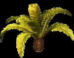 R11 - Palms - 2013 - 018.png