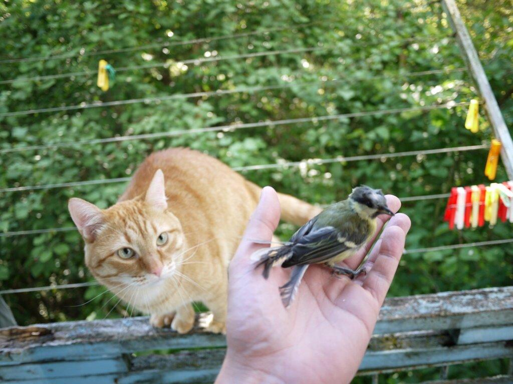 кошка не умеет ловить мышей